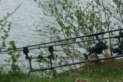 Carpyear 2014